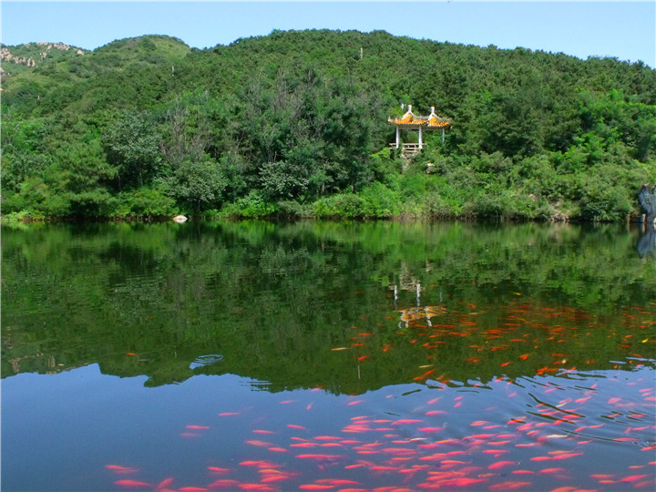 北普陀山风景名胜欢迎您!